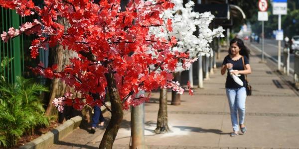 Pohon Plastik Picu Netizen Tagih Janji Gubernur Anies