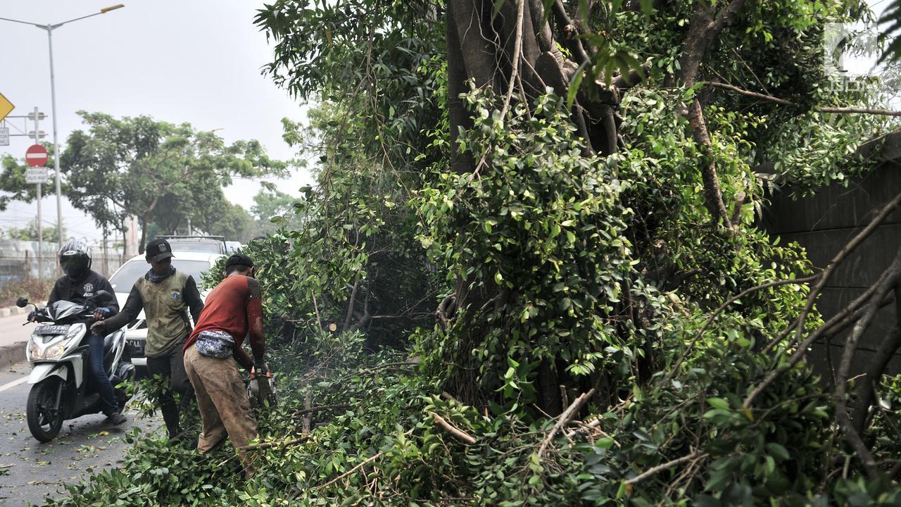 Pohon Tumbang Timpa Motor Polantas di Lapangan Banteng