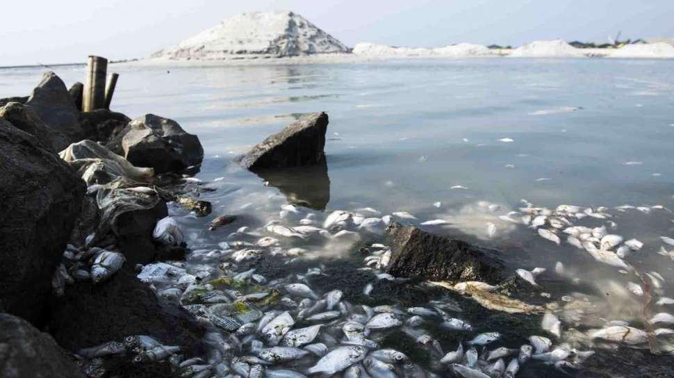 Ikan di Kali Ancol Tiba-tiba Mati Diduga Akibat Limbah