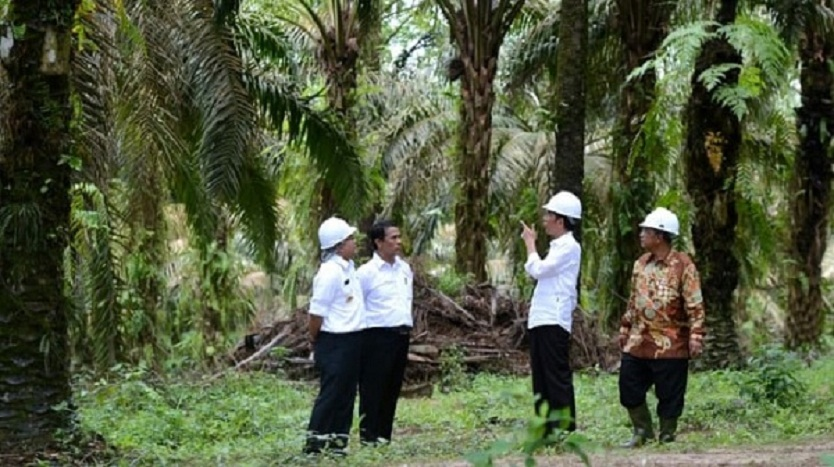 Soal Sawit, Jokowi Kritik Keras Uni Eropa