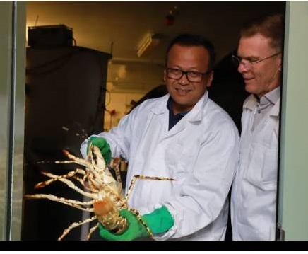 Diduga Terpapar Virus Lobster KPK Tangkap Menteri KKP