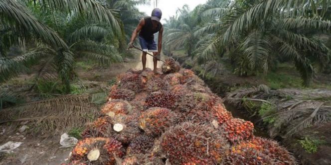 Indonesia Minta India Tak Diskriminasi Soal Sawit