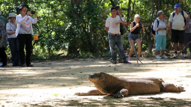 Penutupan Pulau Komodo Diprotes Keras