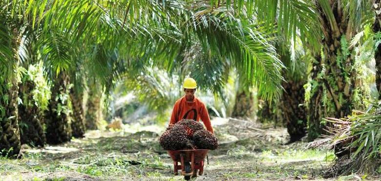 Aliansi Industri Eropa Dukung Indonesia Menentang Diskriminasi Sawit