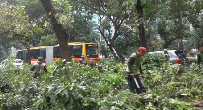 Pohon Rawan Tumbang di Mampang Prapatan Ditebang