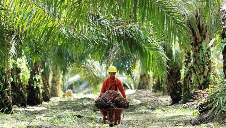 PinmID Berjuang Menentang Industri Kelapa Sawit