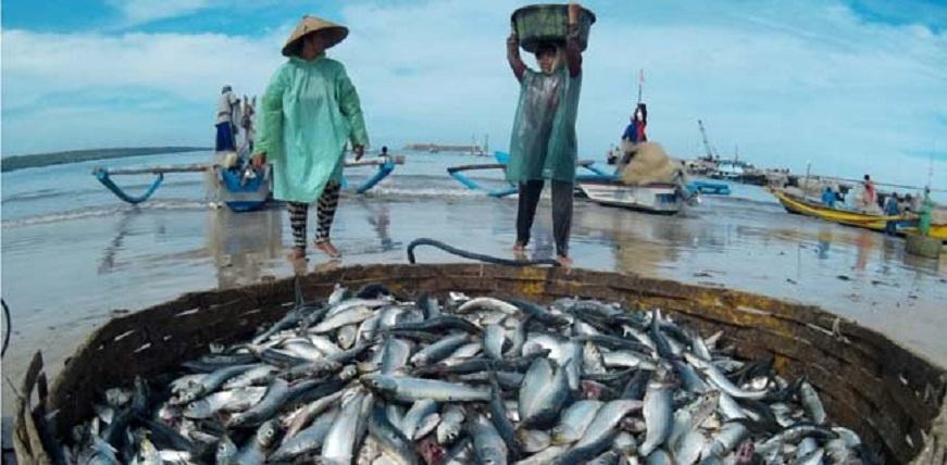 Sejak 2014, Produksi Ikan Tangkap Meningkat Signifikan