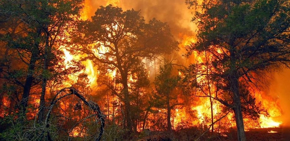 Hutan di Lereng 3 Gunung Terbakar