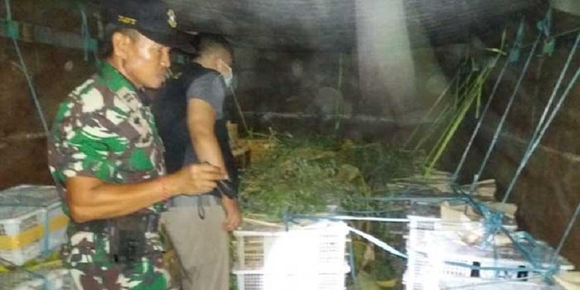 1500 Ekor Burung dari Lombok  Diselundupkan ke Bali
