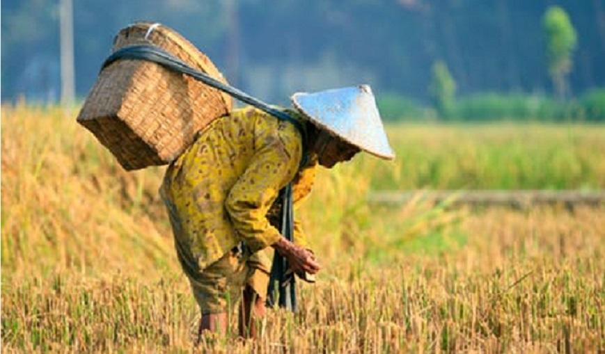 Pemerintah Hadir demi  Kesejahteran Petani